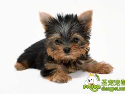 冬季狗狗易患的疾病 冬季易患的急性病